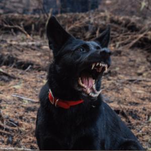 HAR_aggressive-dog