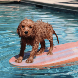 HAR_animal-rescue-wet-dog